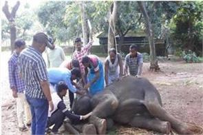 virus spreads in nandankanan zoo 4 elephants killed