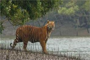 plan will be made for the conservation of tigers in mountainous areas
