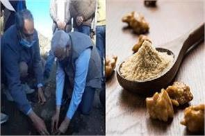 asafoetida will now be grown in the country itself