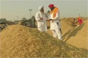 paddy procurement rises nine fold in 13 days in punjab