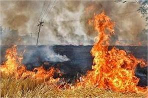 stubble burns in fields of punjab