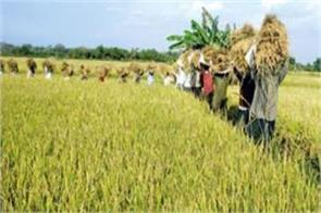 modi government buys one lakh tonnes of paddy on msp