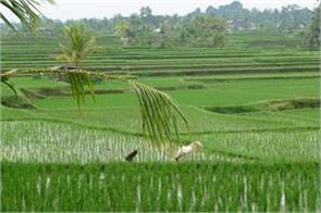 paddy procurement 33 percent in last 12 days