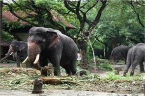 world largest elephant care center in kerala