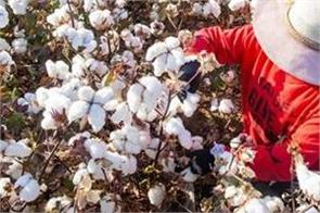 us bans cotton imports from xinjiang firm over slave labor