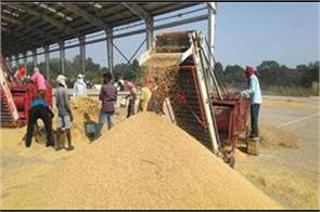 government has so far procured 368 7 lakh tonnes of paddy on msp