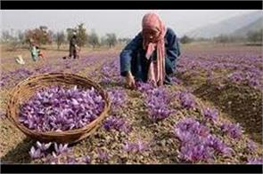 jammu and kashmir launches kashmiri saffron in uae market with gi tag