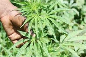 un has accepted cannabis is a medicine 27 countries voted in favor