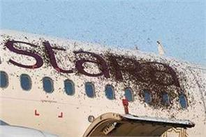 a swarm of bees attacked planes at kolkata airport