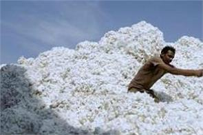 cotton market ran on the fast track