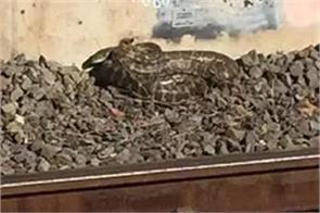 python stopped the speed of the train