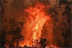 fires spread in australian jungles and catastrophic pm morrison apologizes