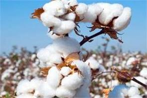 indian cotton trade is now in a normal state