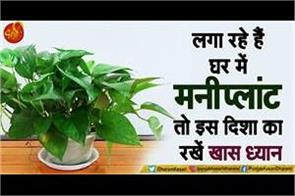 vastu tips for money plant