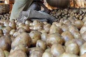 potato prices rose by 20 percent due to rumors