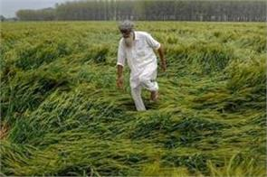 government will give relief to farmers ruined by rain