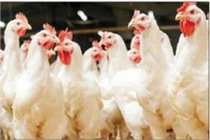despite the government s cooperation the poultry industry