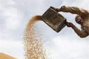 punjab government s big relief to farmers crop to be purchased from homes