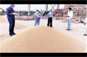 changes in weather wheat purchase time extended