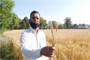 farmers are upset for harvesting crop