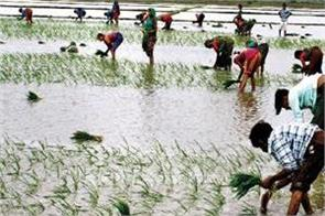 10 000 crore rupees will soon be released for farmers on kharif crop waste