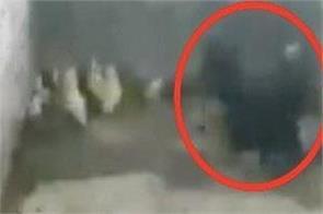 brave battle cobra chicks video viral