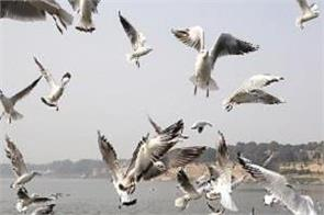 foreign birds seen in ganges water for the first time