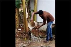 viral video king cobra gets heat man bathes water bucket