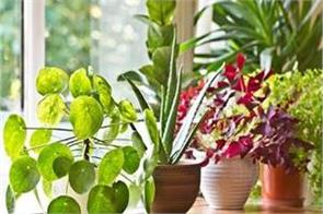 plants give positivity these plants are lucky according to vastu