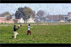 delhi govt issued advisory to deal with locust attack