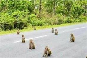 scientists involved in understanding the social distancing behavior of monkeys