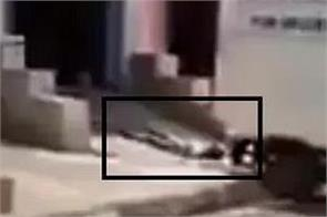 truth about abuse video of dead bodies revealed