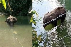 congress bjp face to face over death of pregnant elephant