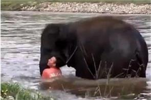 video little elephant reached to save drowning man