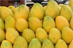 mango baba mobile app launched