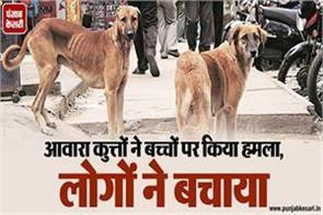 stary dogs danger in rajouri