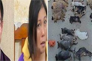 vietnam couple detained over killing pet dogs and cats for meat