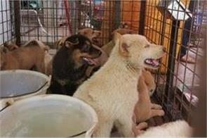 china s annual dog meat fair opens activists hope for last time