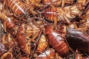 what happened in china when millions of cockroaches attacked sudden