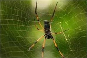if china is a spider then india is its victim