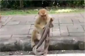 monkey afraid of corona wearing desi mask