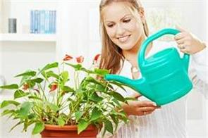 these indoor plants will also give positivity with pure environment