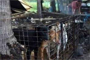 cambodian province famous for angkor wat bans dog meat