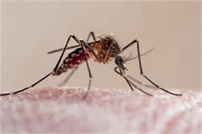 death toll from west nile fever reached three in spain
