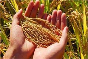 nsc for supply of certified seeds to farmers
