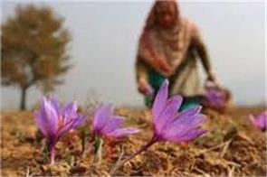 e auction of saffron in kashmir
