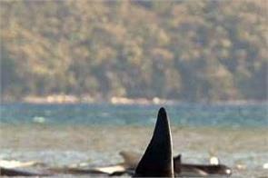 australia tasmania whales