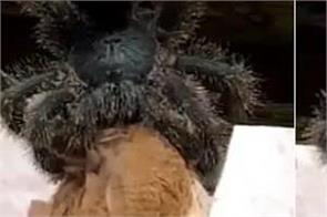 social media birds spider video viral