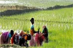 paddy procurement started in all states