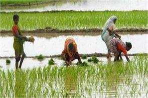 kharif sowing reaches new record level of 1 095 38 lakh hectare govt